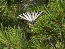 Гусеница бабочка