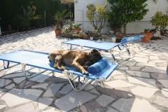 Наша сторожевая собака на отдыхе